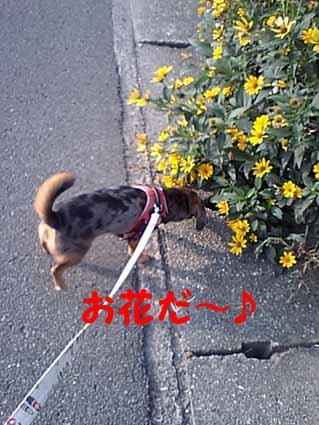 お花だ~♪