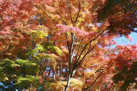 追手門跡附近の紅葉