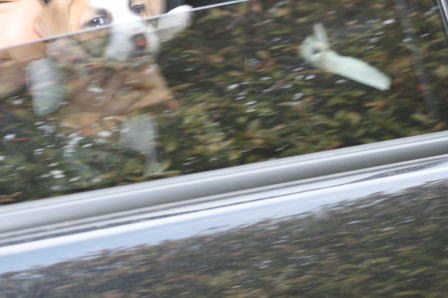 車中のチップ