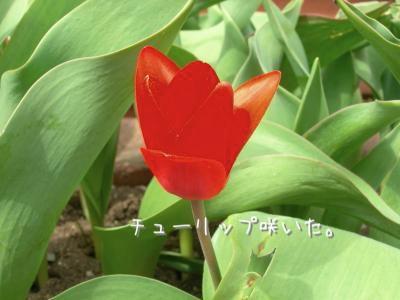 DSCN3045_convert_20110419220749.jpg