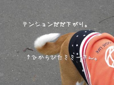 DSCN6936_convert_20110424193601.jpg