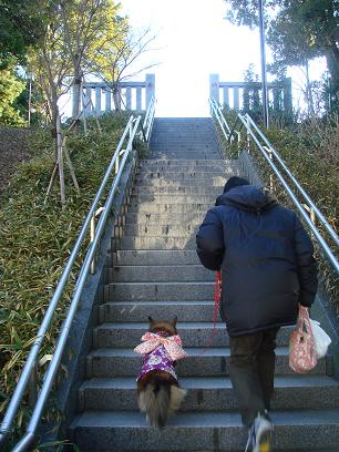 朝一の階段きっついワン!