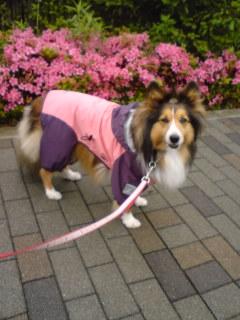 雨の中散歩2