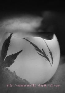 モノクロ落ち葉