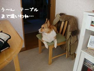 椅子乗り杏
