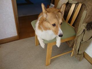 椅子乗り杏2