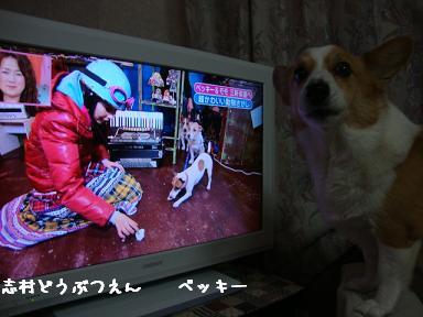 テレビと紋兄