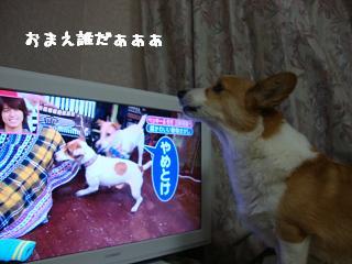 テレビと紋兄2