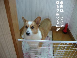 廊下待ち紋兄2