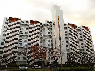 minamiibaragi-orange2.jpg