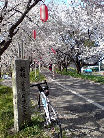 桜堤で記念写真