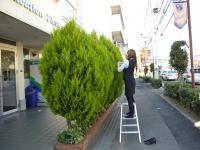 植栽飾りつけ中(1)