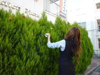 植栽飾りつけ中(2)