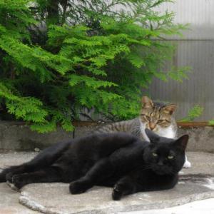 20110923_ねこ