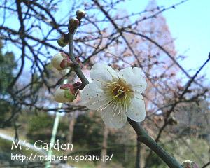 2006-03-05-4.jpg