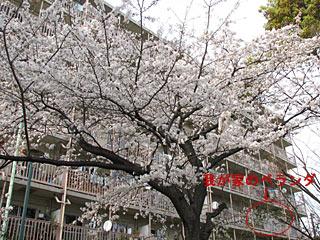 2007-04-01-5.jpg