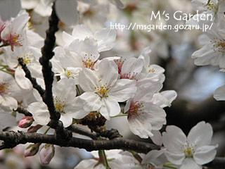 2007-04-01-7.jpg
