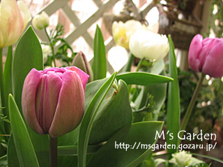 2007-04-09-1.jpg