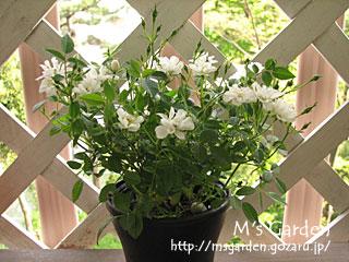 2007-05-05-06.jpg