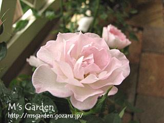 2007-05-14-03.jpg