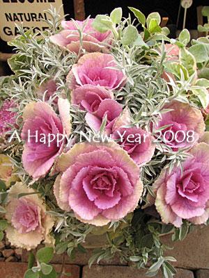 2008-01-05.jpg