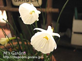 2008-02-06-01.jpg