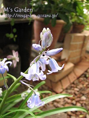2008-04-19-05.jpg