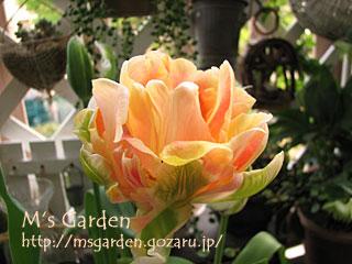 2008-04-27-01.jpg
