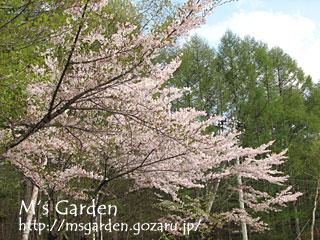 2008-05-03-01.jpg