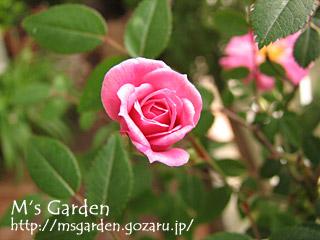 2008-05-09-01.jpg