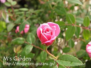 2008-05-09-02.jpg