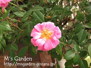 2008-05-09-03.jpg