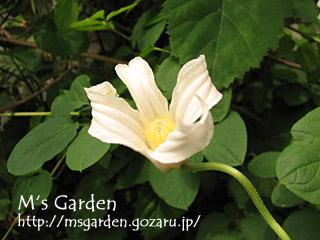 2008-05-09-06.jpg