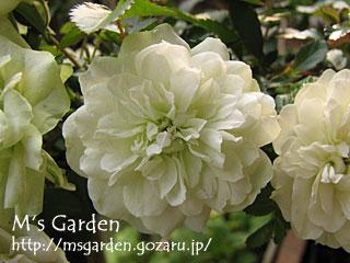 2008-11-04-01.jpg