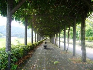 藤の木の並木道