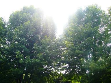 そよ風に揺れる木