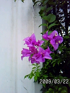 PA0_0040_20090619044251.jpg