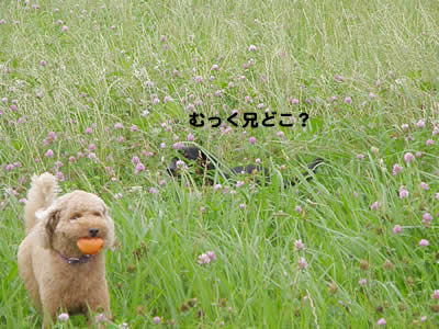 20090706_3.jpg