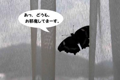 08/8/16①