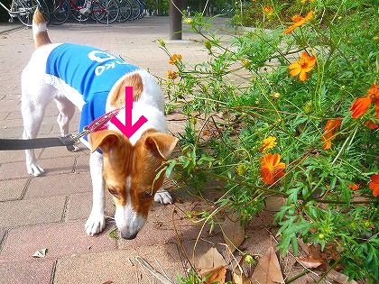 花とデコジワ