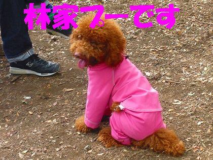 ピンクが似合います
