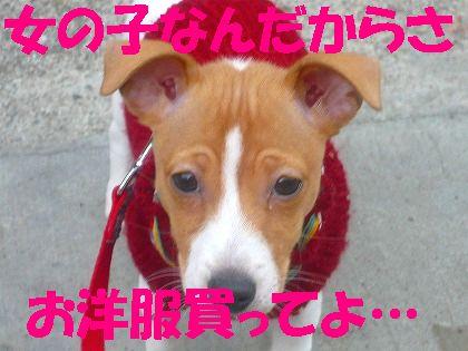 お散歩デビューのデコジワ