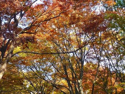 秋・・・ですね~