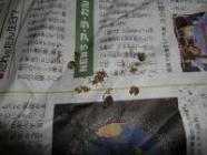 幼虫(荒島)