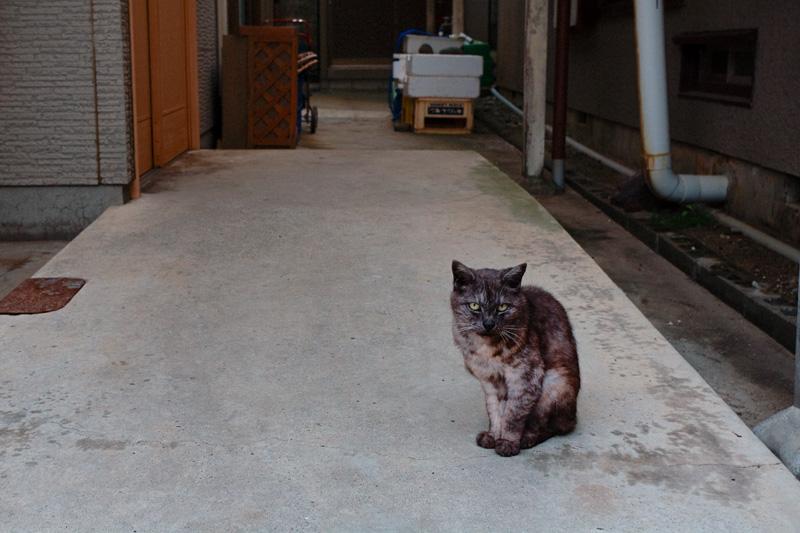 長崎町ねこ