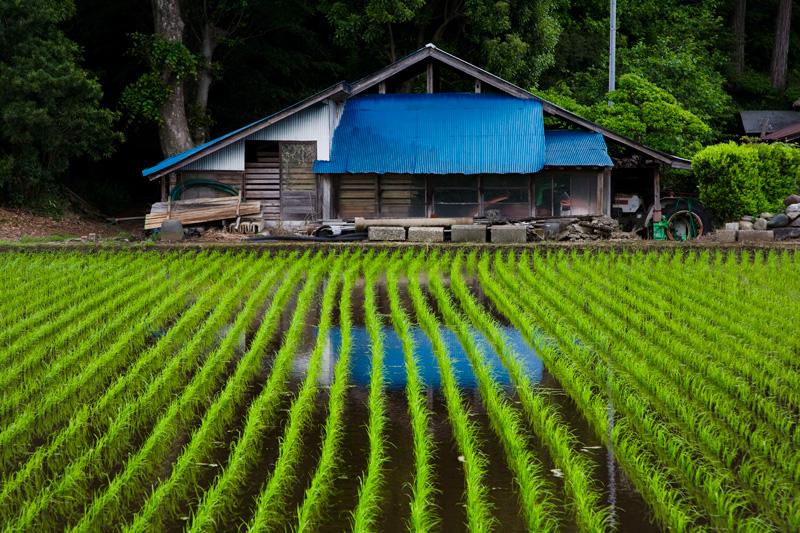 農具小屋と水田