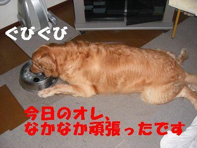 CIMG7415.jpg