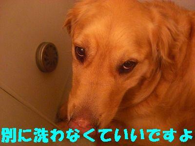 CIMG7426.jpg
