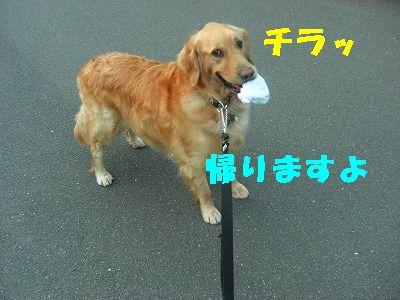 CIMG7455.jpg