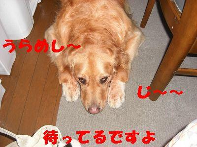CIMG7535.jpg